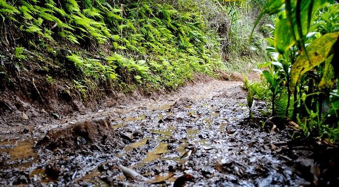 Muddy-Forest-Trail